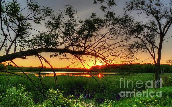 Fiery Swamp Sunset Print by Deborah Smolinske