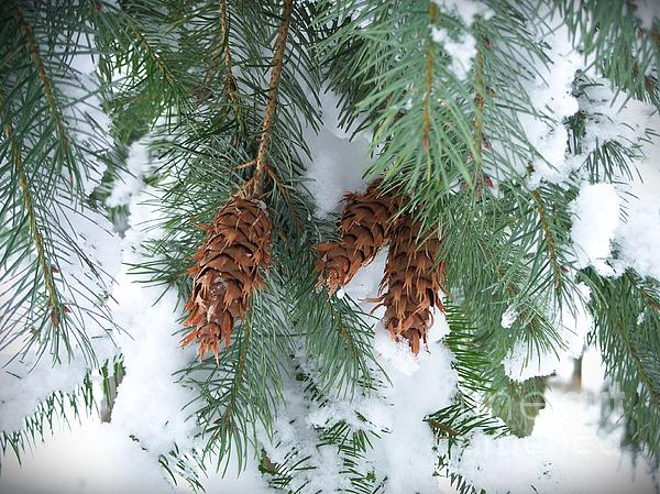 Chalet Roome-Rigdon - Fir Cones and Snow