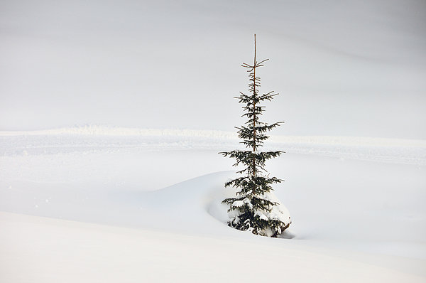 Fir Tree And Lots Of Snow In Winter Kleinwalsertal Austria Print by Matthias Hauser