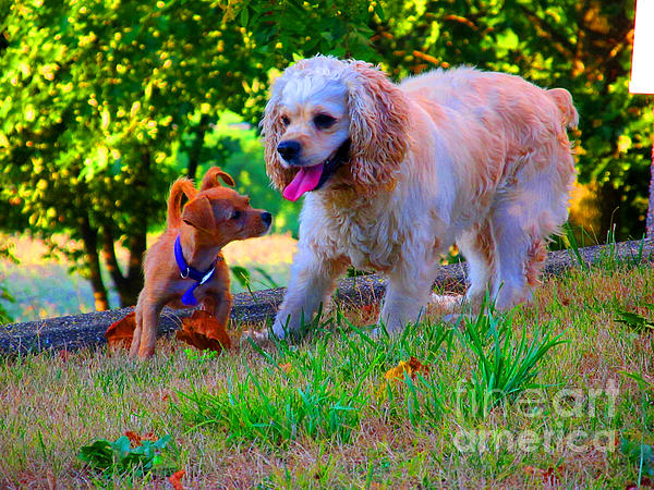 First Anniversary Image Angel And Chika Print by Tina M Wenger