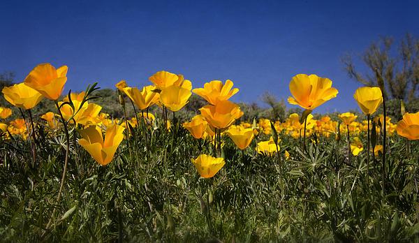 Saija  Lehtonen - First Signs of Spring
