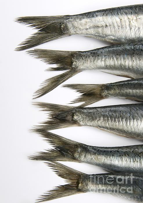 Fish Print by Bernard Jaubert