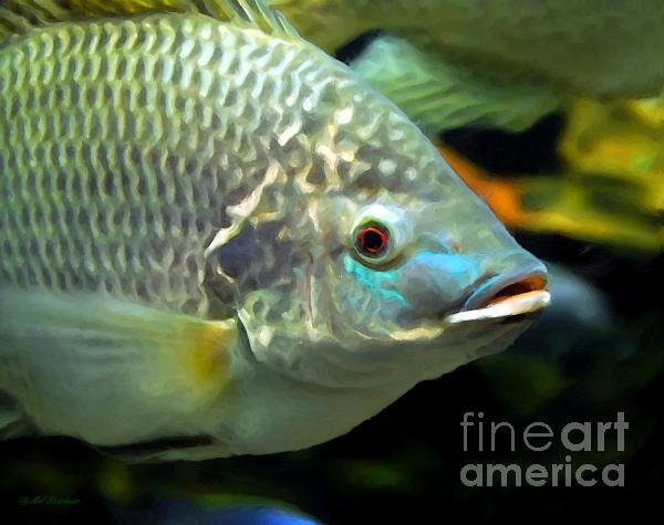 Fish Lips Print by Mel Steinhauer