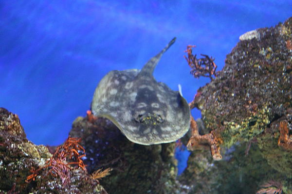Fish national aquarium in baltimore md 1212108 by dc for Maryland freshwater fish