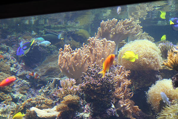 Fish national aquarium in baltimore md 1212120 by dc for Maryland freshwater fish