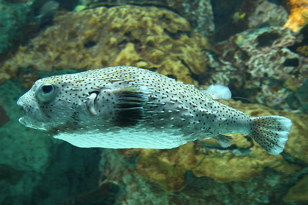 Fish national aquarium in baltimore md 1212142 by dc for Maryland freshwater fish