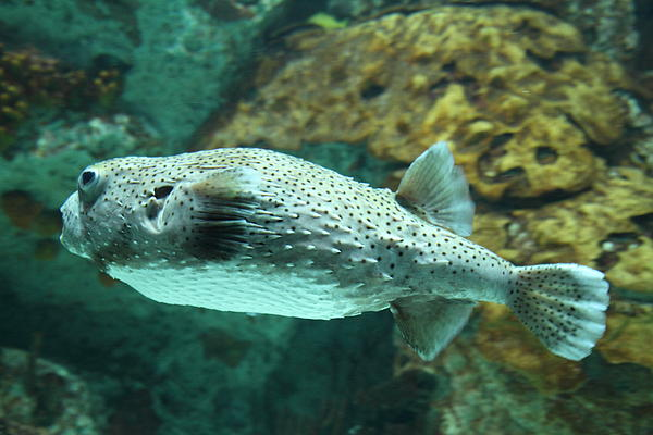 Fish national aquarium in baltimore md 1212143 by dc for Maryland freshwater fish