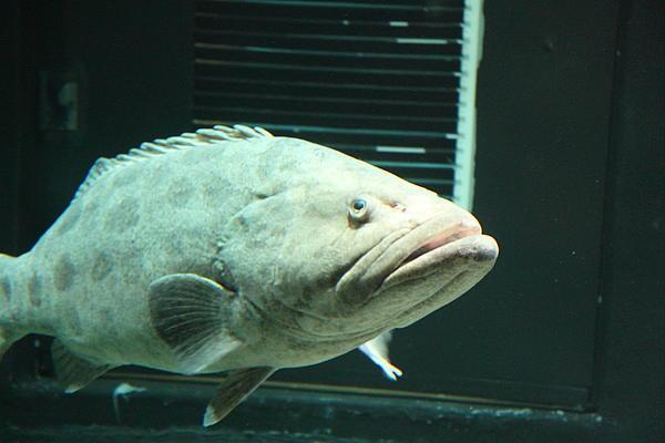 Fish national aquarium in baltimore md 1212145 print for Maryland freshwater fish