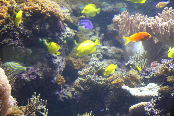 Fish national aquarium in baltimore md 121246 print by for Maryland freshwater fish