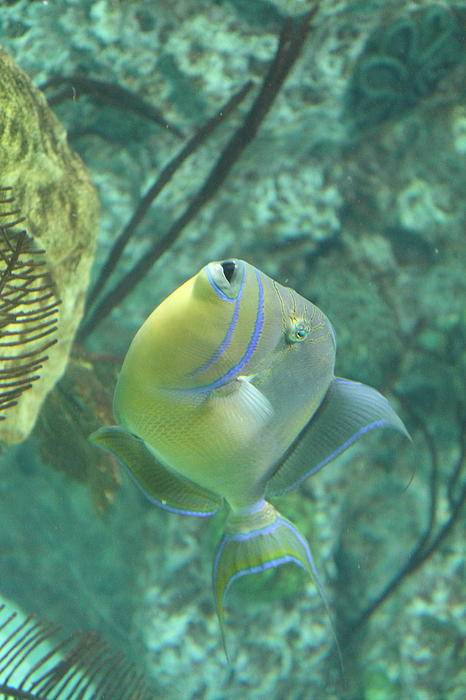 Fish national aquarium in baltimore md 121255 by dc for Maryland freshwater fish
