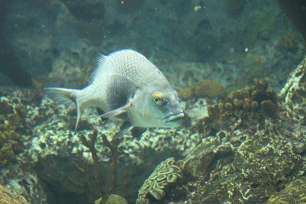 Fish national aquarium in baltimore md 121261 by dc for Maryland freshwater fish
