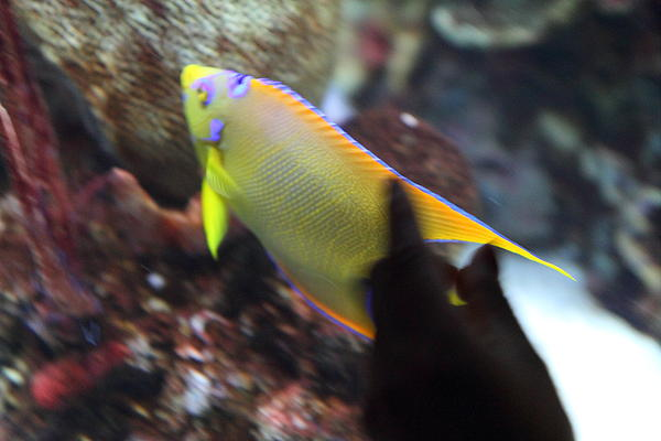 Fish - National Aquarium In Baltimore Md - 121272 Print by DC Photographer