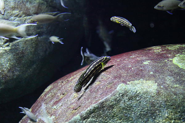 Fish national aquarium in baltimore md 121299 by dc for Maryland freshwater fish