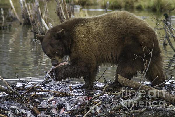 Mitch Shindelbower - Fishing Black Bear