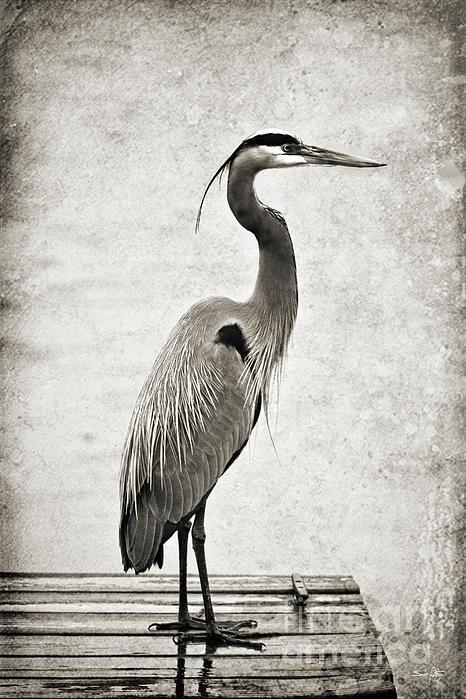 Fishing From The Dock Print by Scott Pellegrin