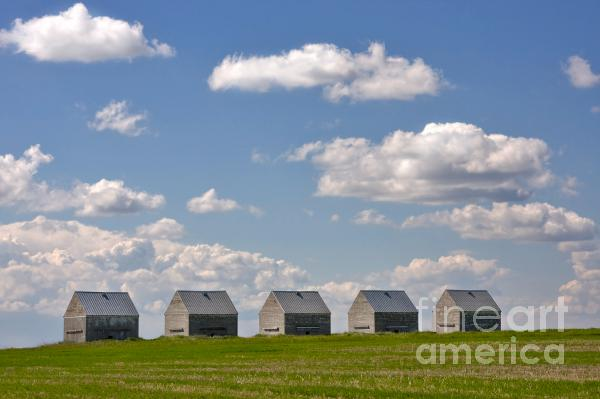 Five Sheds On The Alberta Prairie Print by Louise Heusinkveld