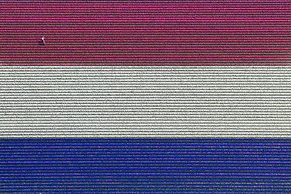 Flag Hyacinths, Lisse Print by Bram van de Biezen
