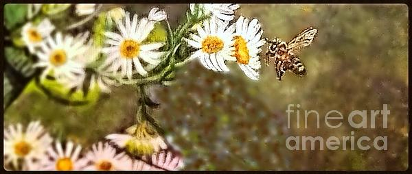 Kimberlee  Baxter - Flight of a Golden Fairy Honeybee Lighting Upon a Daisy