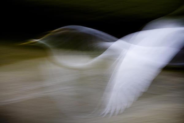 Anne Rodkin - Flight of Fancy