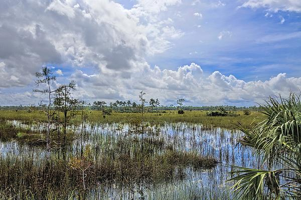 Florida Everglades 0173 Print by Rudy Umans