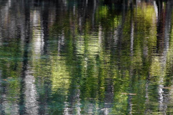 Florida Silver Springs River Print by Christine Till