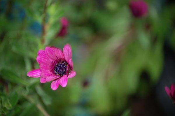 Flower Bokeh  Print by Jordan Rusin
