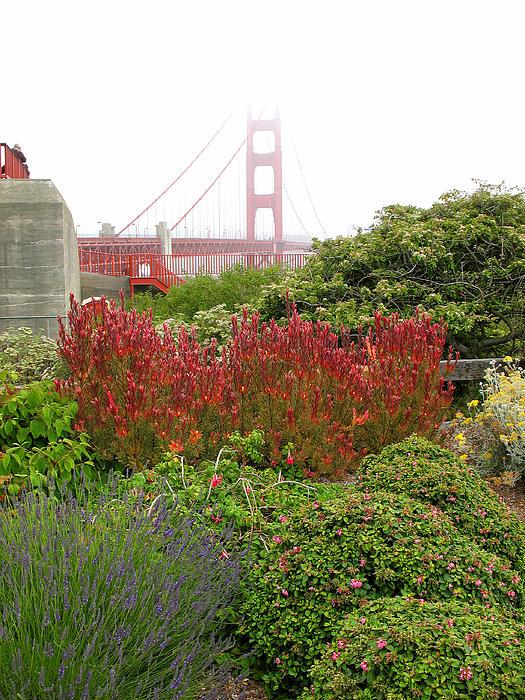 Flower Garden At The Golden Gate Bridge Print by Connie Fox