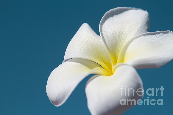 Flower In The Sky Print by Sharon Mau