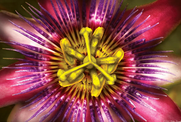 Flower - Intense Passion  Print by Mike Savad