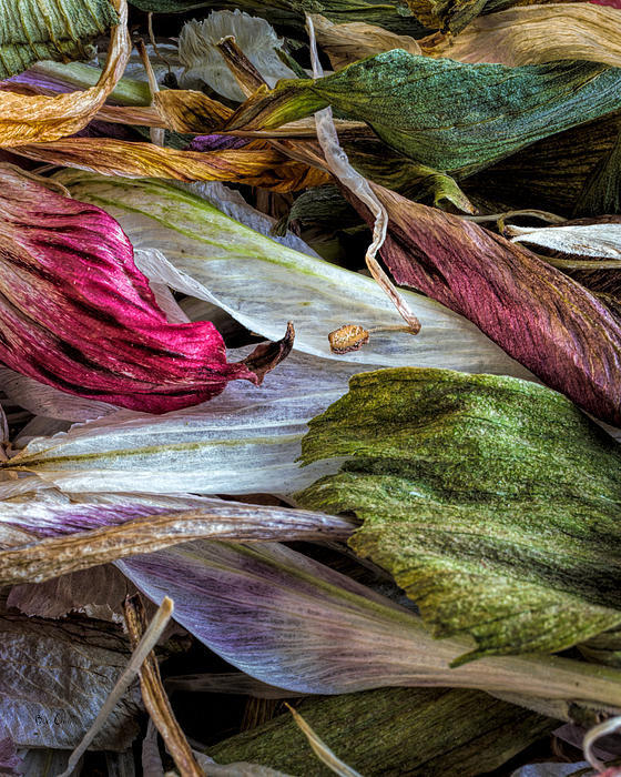 Flowers Print by Bob Orsillo
