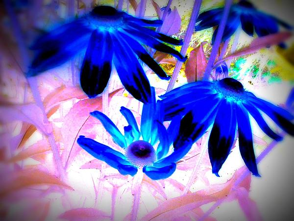 Karla Hafdahl - Flowers in Blue-D