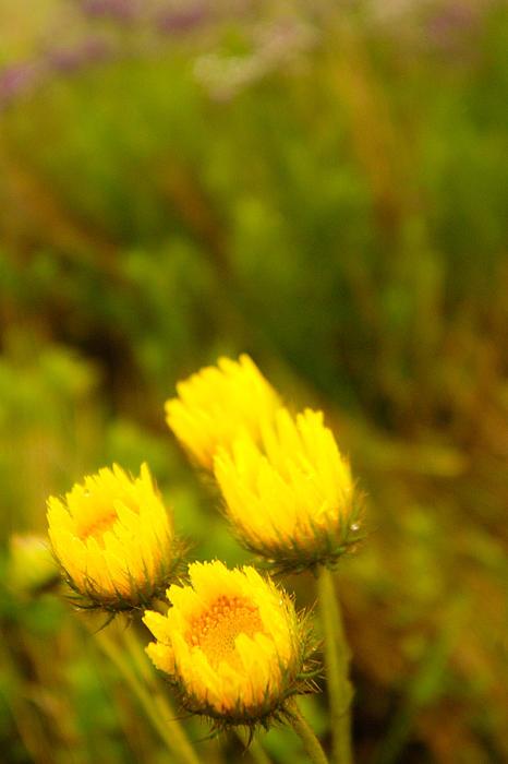 Flowers In The Wild Print by Alistair Lyne