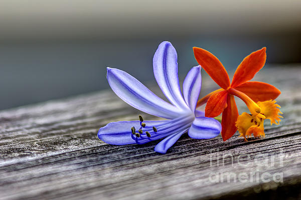 Marvin Spates - Flowers of Blue and Orange