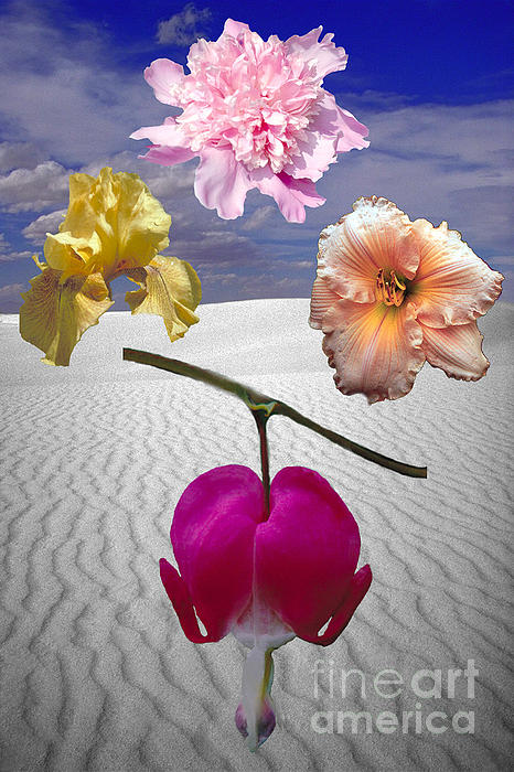 ImagesAsArt Photos And Graphics - Flowers Of Fantasy