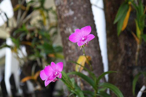 Flowers - Panviman Chiang Mai Spa And Resort - Chiang Mai Thailand - 01131 Print by DC Photographer