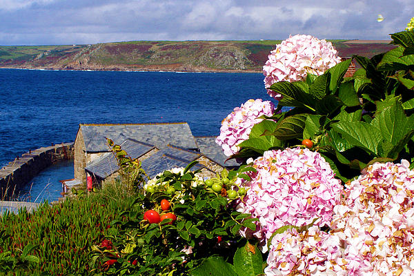 Flowers With A Sea View Print by Terri  Waters
