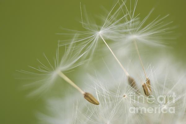 Anne Gilbert - Fly Away