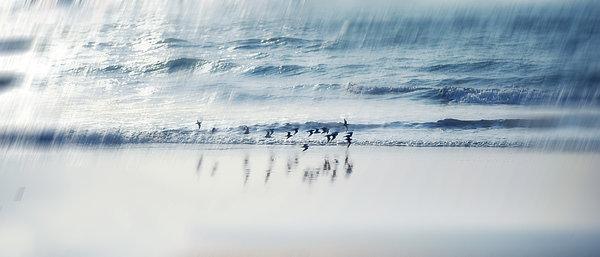 Flying Free Print by Jenny Rainbow