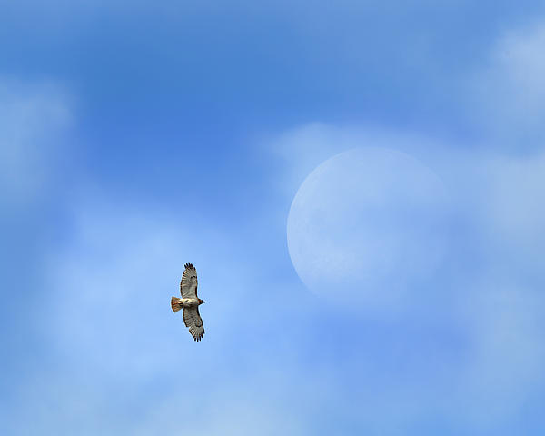 Flying To The Moon Print by Bill  Wakeley
