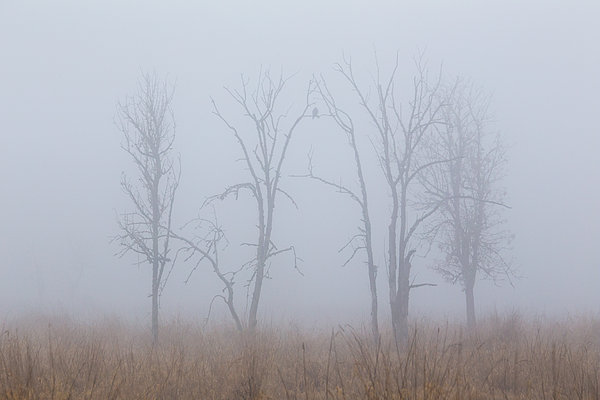Fog Print by Angie Vogel