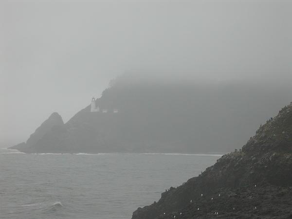Fog At The Coast Print by Yvette Pichette
