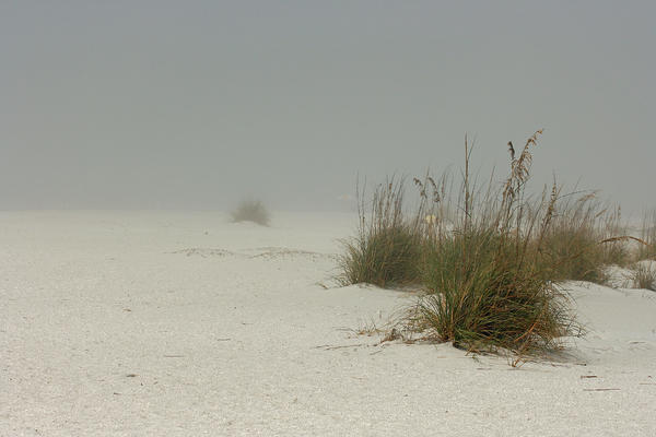 Cindi Ressler - Fog Covered Beach