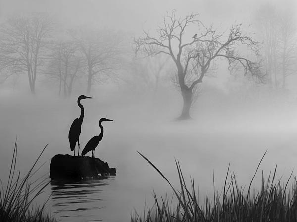 Fog On The Lake Print by Nina Bradica