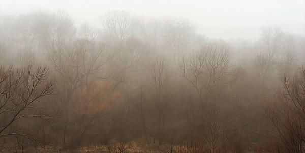 Fog Riverside Park Print by Scott Norris