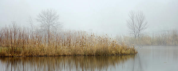 Foggy Duck Pond 1 Print by James Blackwell JR