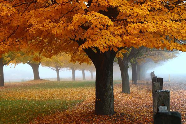 Lynn Hopwood - Foggy Fall Morning