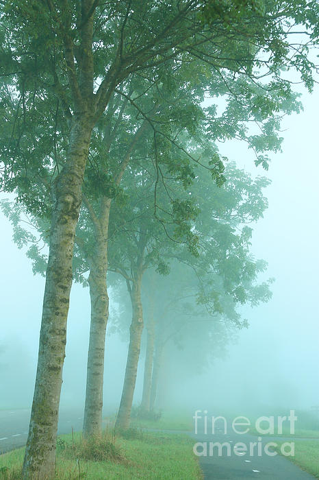 HJBH Photography - Foggy morning atmosphere