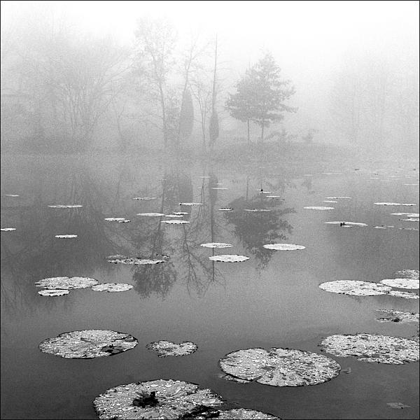 Foggy Morning Print by Wendell Thompson
