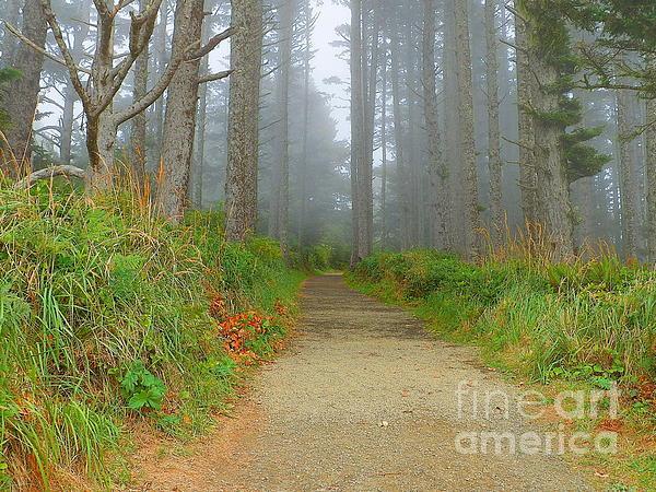 J J - Forest in the Mist - Coastal Trail