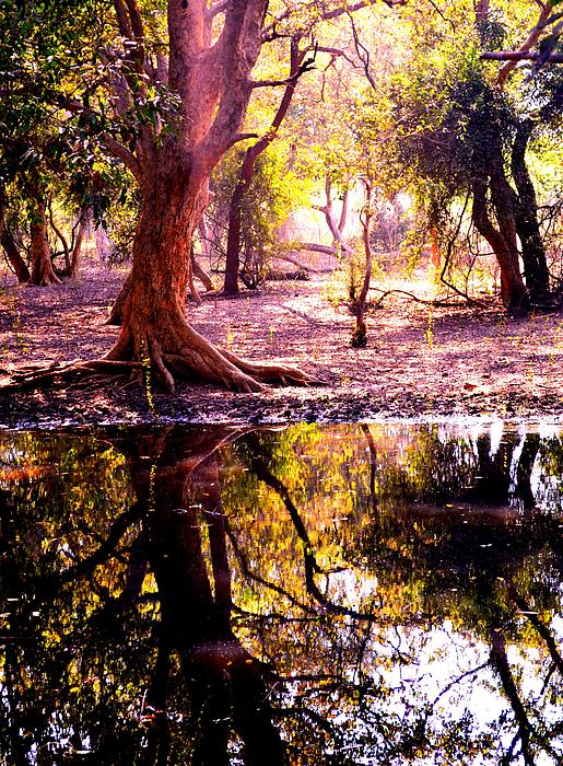 Forest Reflection Print by Deepti Chahar